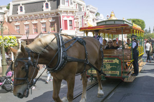 Disneyland cast member Jim guides a horse on Disneyland's Horse Trolley line on Main Street U.S.A.